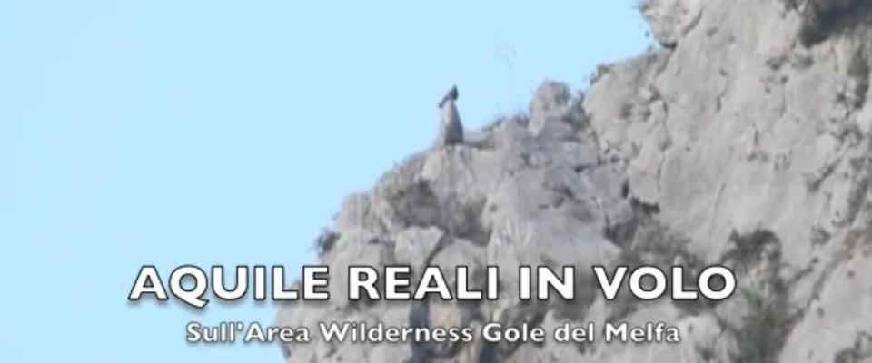 Wilderness IT - I NOSTRI VIDEO - AQUILE REALI SULL AREA WILDERNESS GOLE DEL MELFA